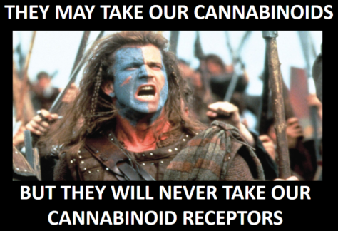 mel gibson cannabinoid brave heart cannabis